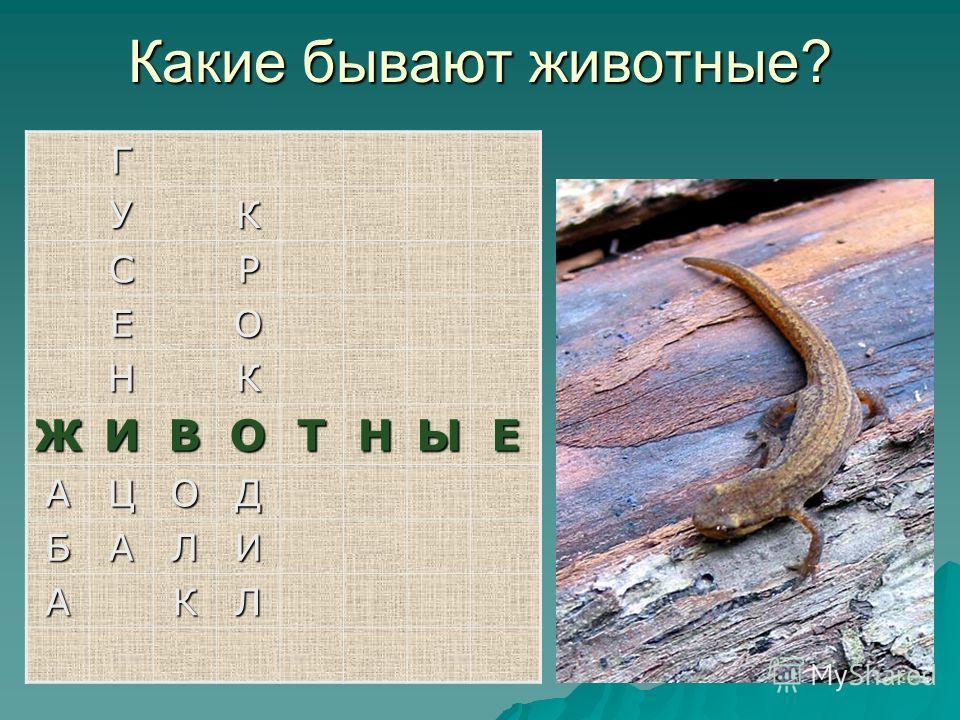 Г УК СР ЕО НК ЖИВОТНЫЕ АЦОД БАЛИ АКЛ