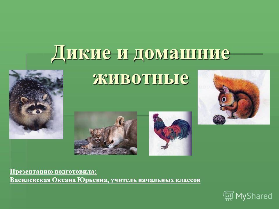 Дикие и домашние животные Презентацию подготовила: Василевская Оксана Юрьевна, учитель начальных классов
