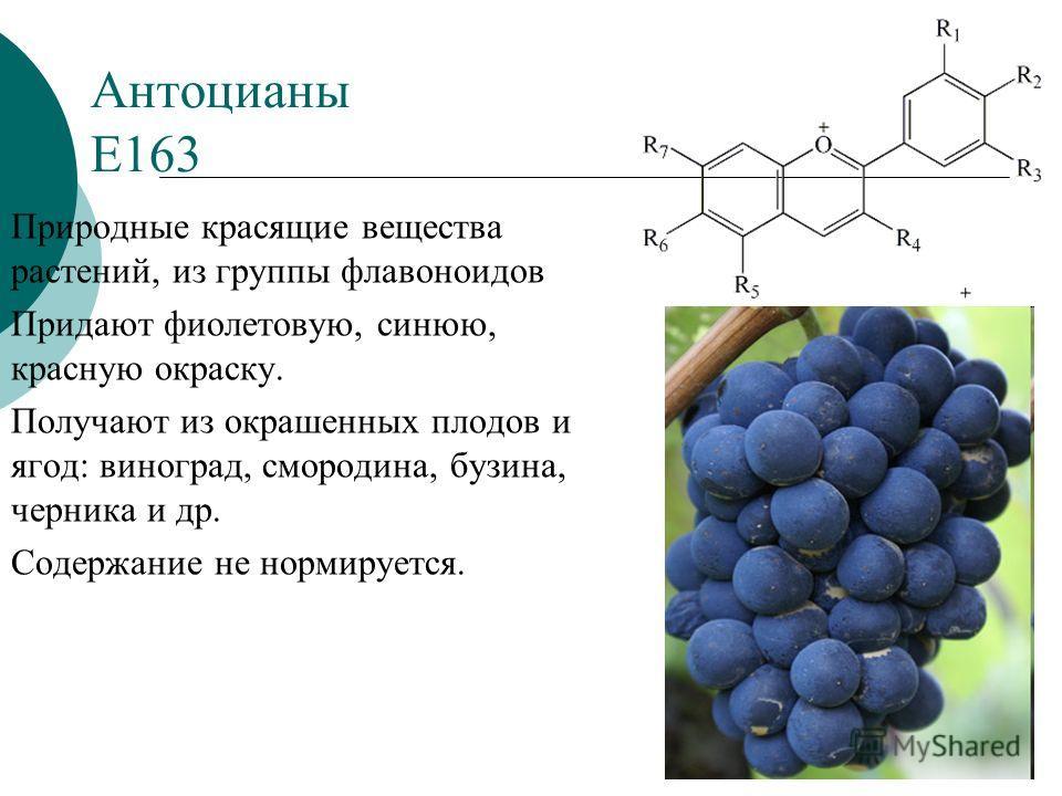 Антоцианы Е163 Природные красящие вещества растений, из группы флавоноидов Придают фиолетовую, синюю, красную окраску. Получают из окрашенных плодов и ягод: виноград, смородина, бузина, черника и др. Содержание не нормируется.