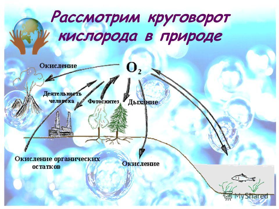 Рассмотрим круговорот кислорода в природе