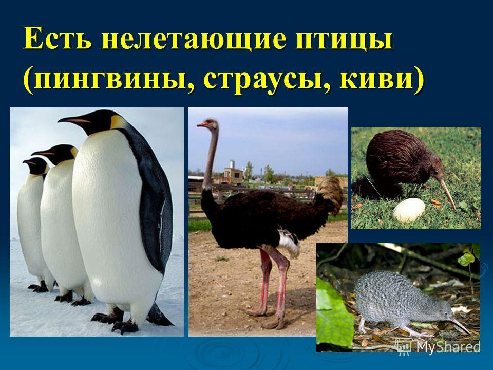 Есть нелетающие птицы (пингвины, страусы, киви)