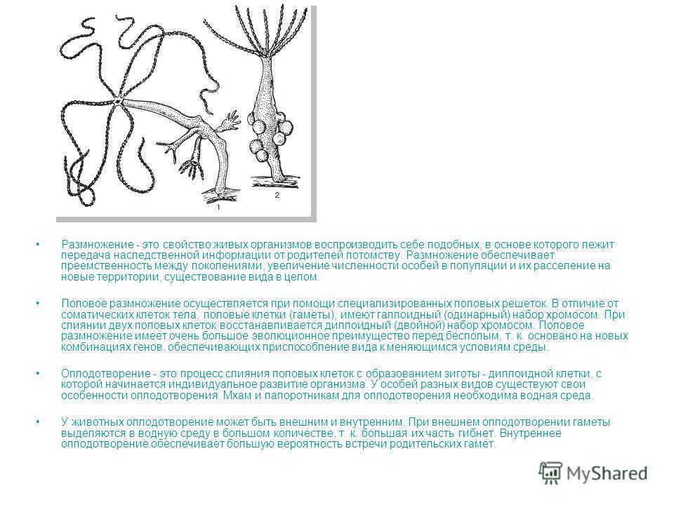 Размножение - это свойство живых организмов воспроизводить себе подобных, в основе которого лежит передача наследственной информации от родителей потомству. Размножение обеспечивает преемственность между поколениями, увеличение численности особей в п