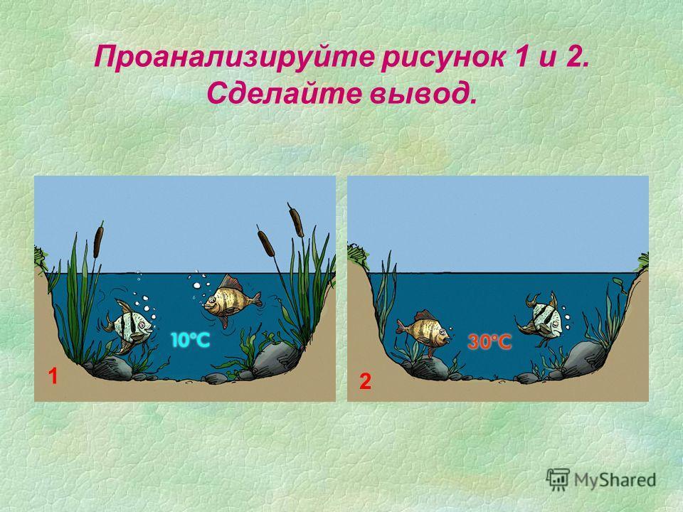 Проанализируйте рисунок 1 и 2. Сделайте вывод. 1 2