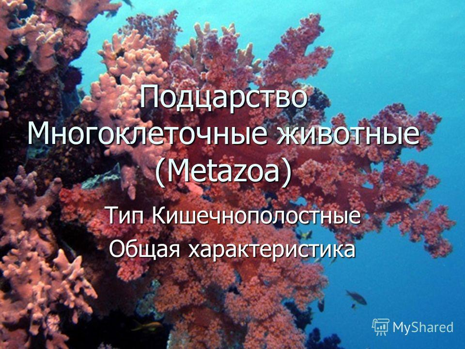 Подцарство Многоклеточные животные (Metazoa) Тип Кишечнополостные Общая характеристика