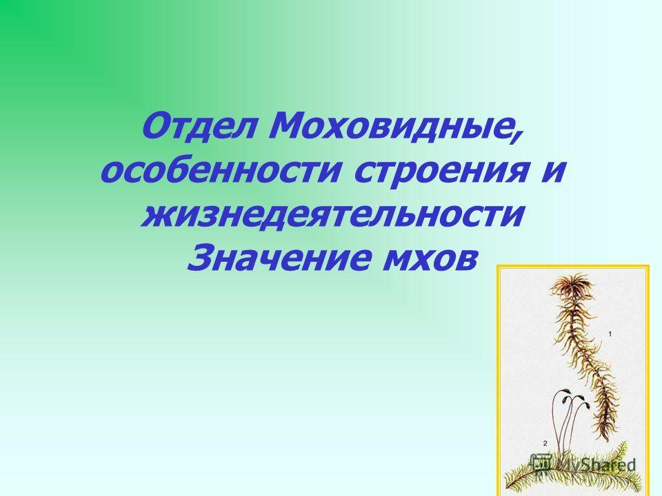 Отдел Моховидные, особенности строения и жизнедеятельности Значение мхов