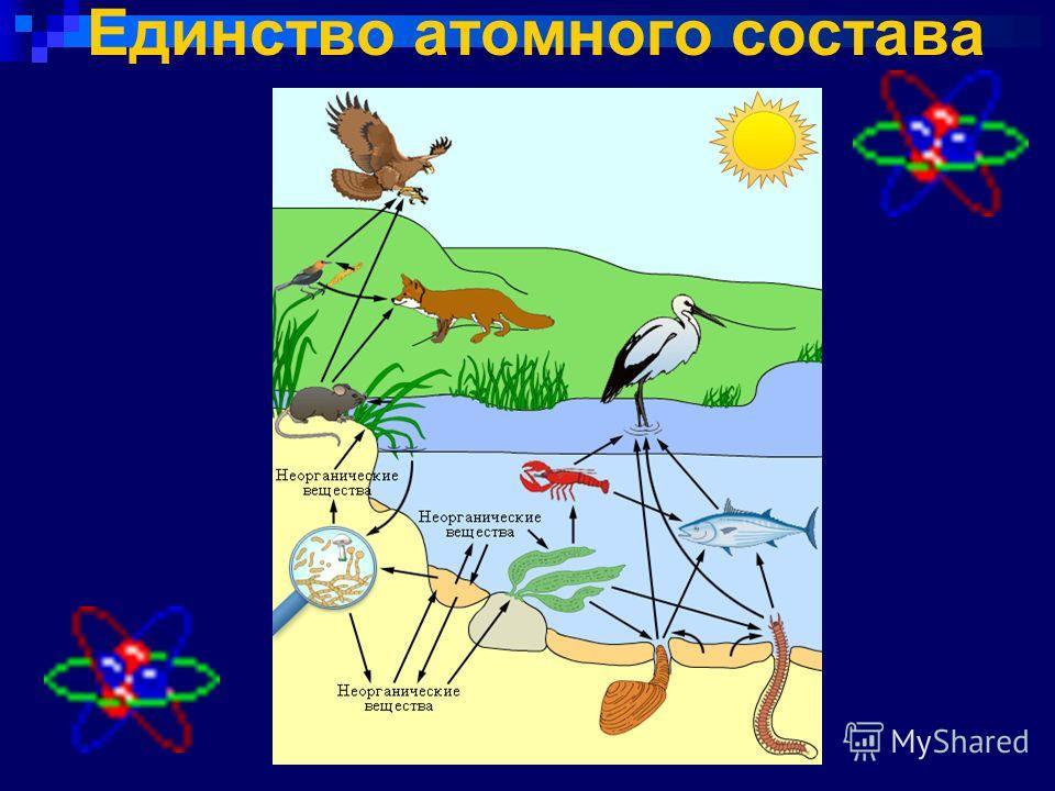 Единство атомного состава
