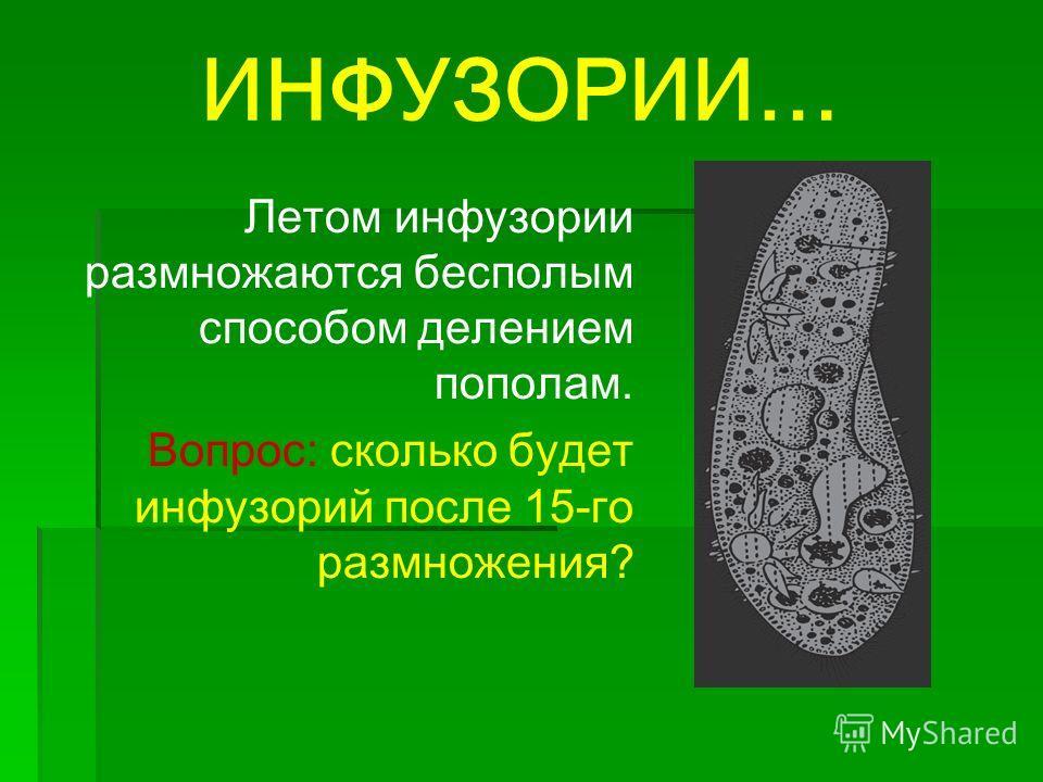 ИНФУЗОРИИ… Летом инфузории размножаются бесполым способом делением пополам. Вопрос: сколько будет инфузорий после 15-го размножения?