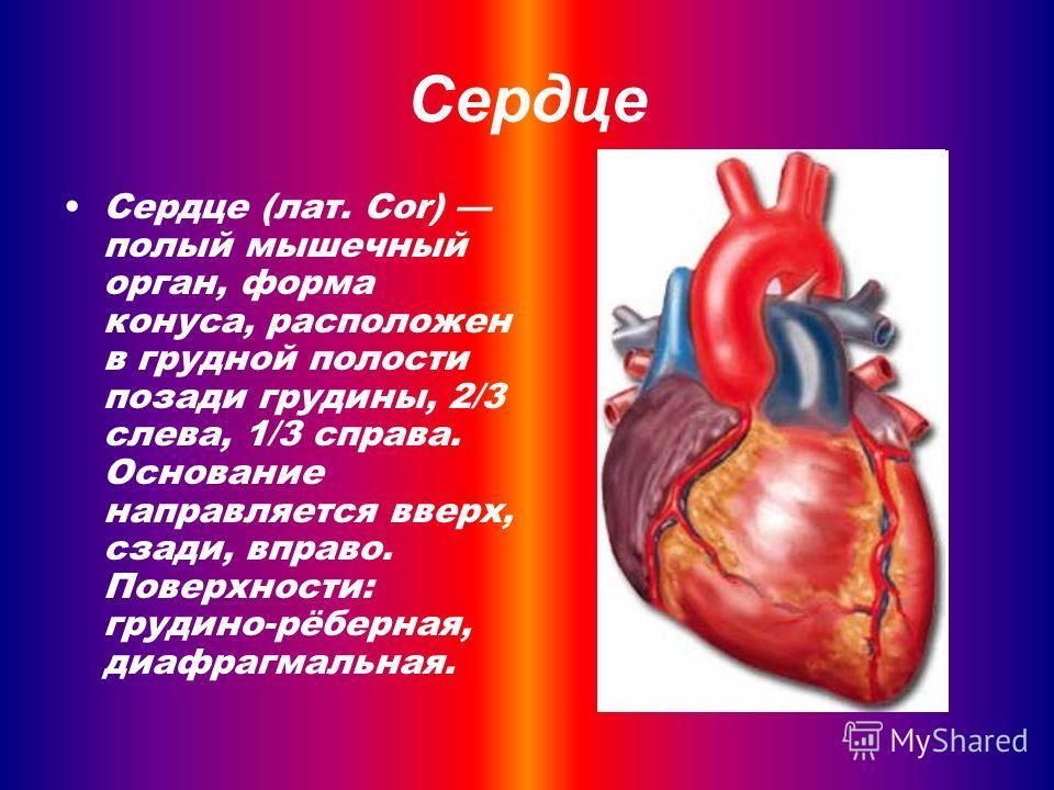 Сердце Сердце (лат. Cor) полый мышечный орган, форма конуса, расположен в грудной полости позади грудины, 2/3 слева, 1/3 справа. Основание направляется вверх, сзади, вправо. Поверхности: грудино-рёберная, диафрагмальная.