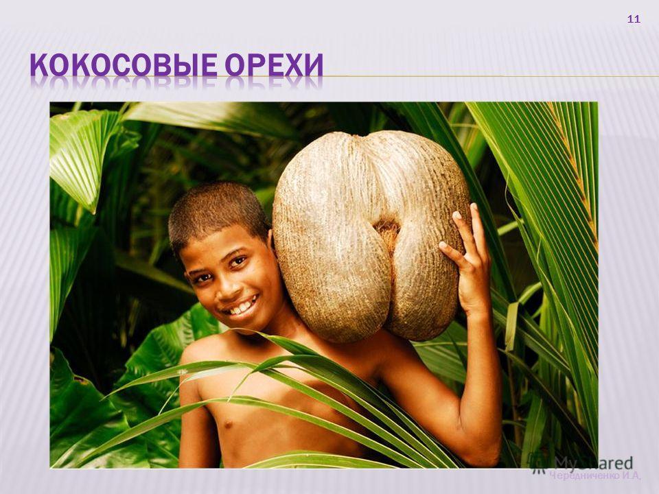 11 Чередниченко И.А,