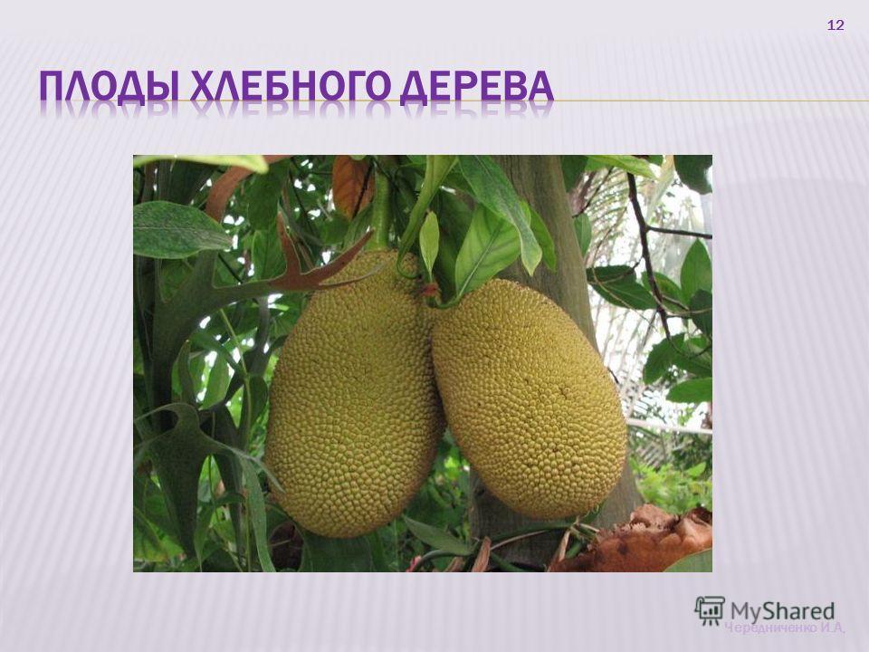 12 Чередниченко И.А,
