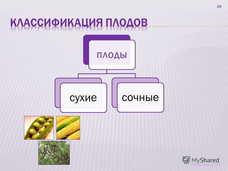 20 плоды сухиесочные Чередниченко И.А,