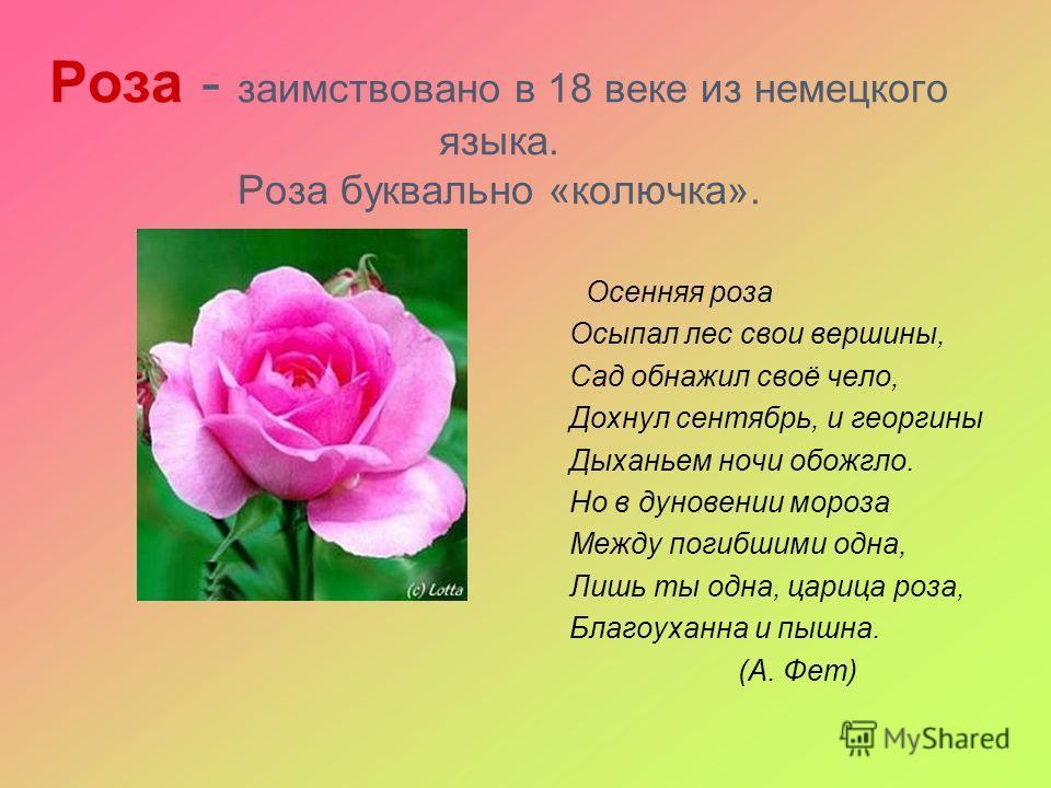 Роза - заимствовано в 18 веке из немецкого языка. Роза буквально «колючка». Осенняя роза Осыпал лес свои вершины, Сад обнажил своё чело, Дохнул сентябрь, и георгины Дыханьем ночи обожгло. Но в дуновении мороза Между погибшими одна, Лишь ты одна, цари