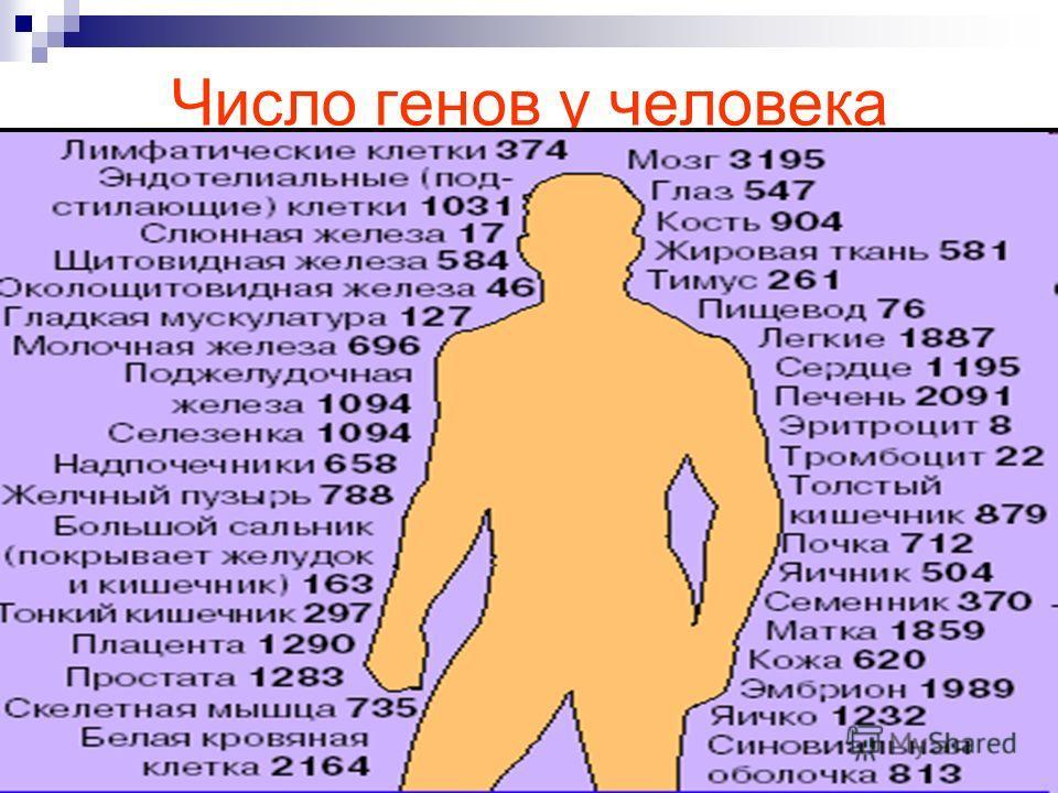 Число генов у человека