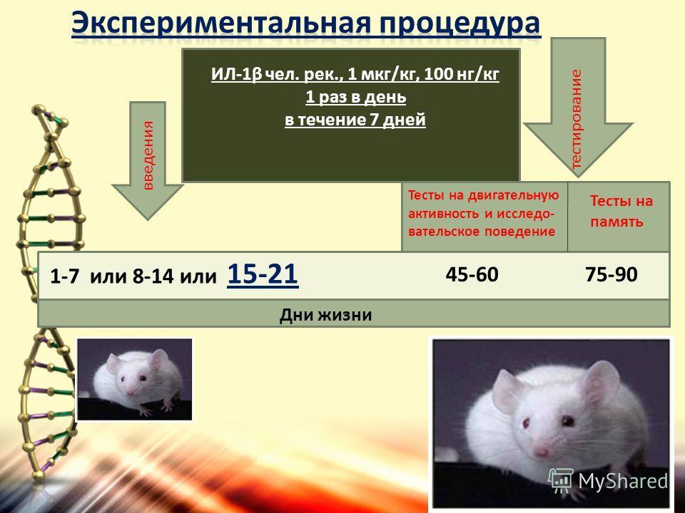 Дни жизни 1-7 или 8-14 или 15-21 75-90 введения тестирование ИЛ-1β чел. рек., 1 мкг/кг, 100 нг/кг 1 раз в день в течение 7 дней 45-60 Тесты на память Тесты на двигательную активность и исследо- вательское поведение