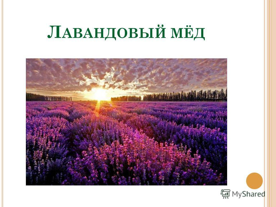 Л АВАНДОВЫЙ МЁД