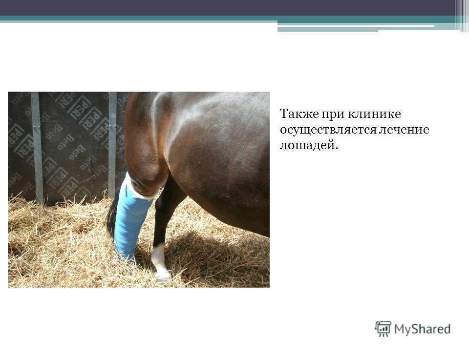 Также при клинике осуществляется лечение лошадей.
