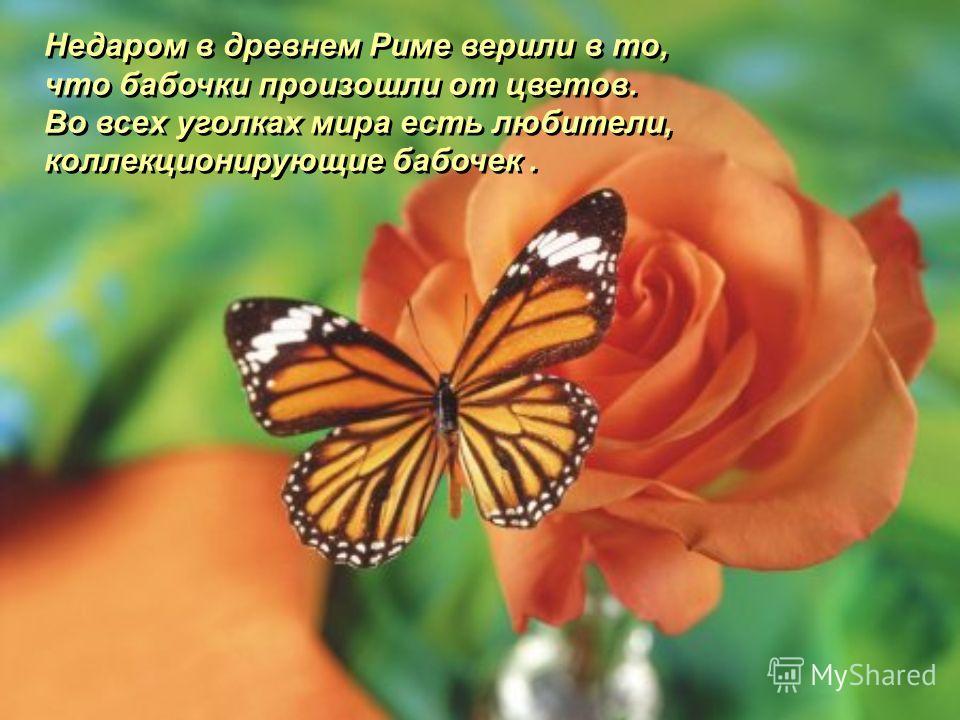 Недаром в древнем Риме верили в то, что бабочки произошли от цветов. Во всех уголках мира есть любители, коллекционирующие бабочек. Недаром в древнем Риме верили в то, что бабочки произошли от цветов. Во всех уголках мира есть любители, коллекциониру