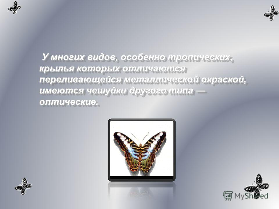 У многих видов, особенно тропических, крылья которых отличаются переливающейся металлической окраской, имеются чешуйки другого типа оптические.