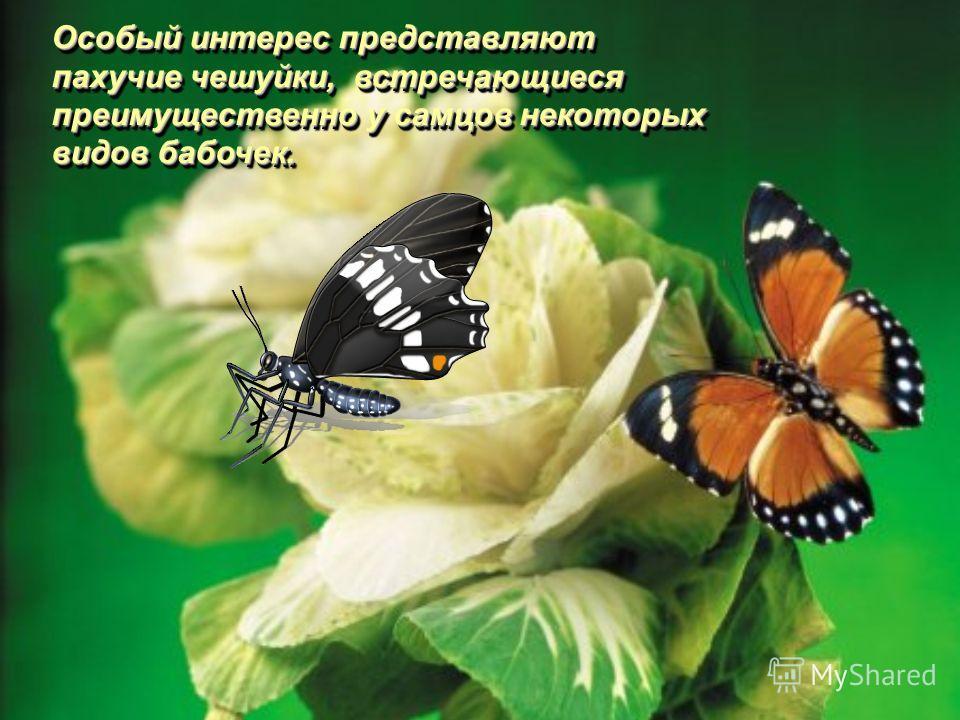 Особый интерес представляют пахучие чешуйки, встречающиеся преимущественно у самцов некоторых видов бабочек.