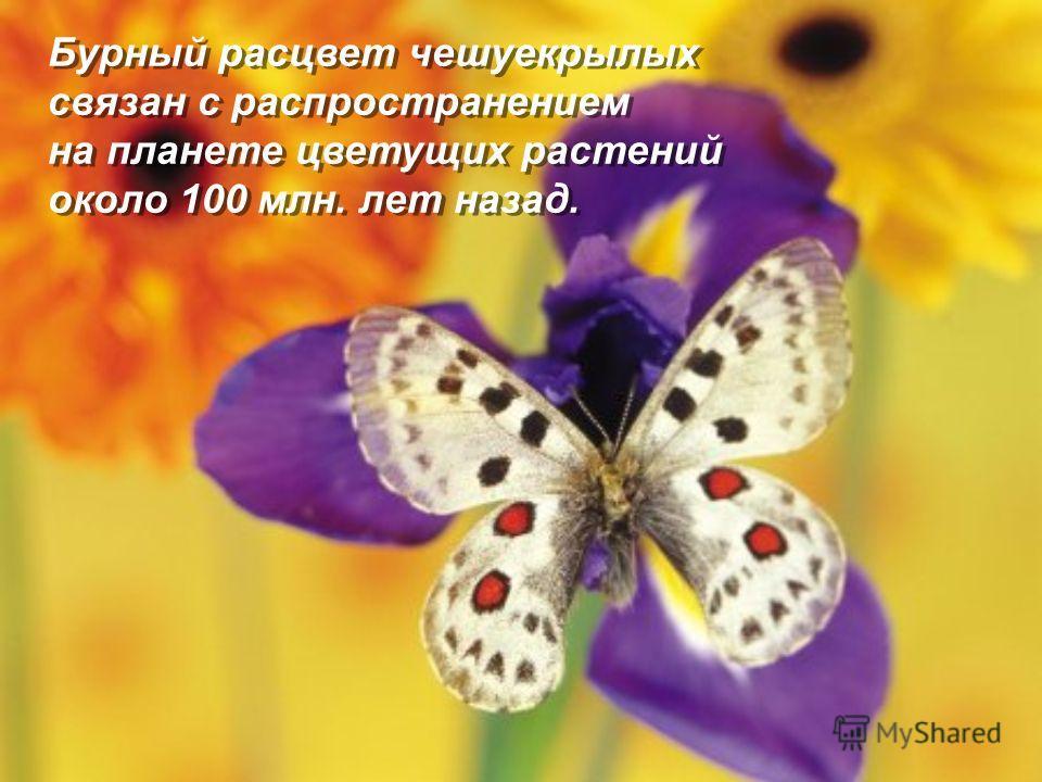 Бурный расцвет чешуекрылых связан с распространением на планете цветущих растений около 100 млн. лет назад.