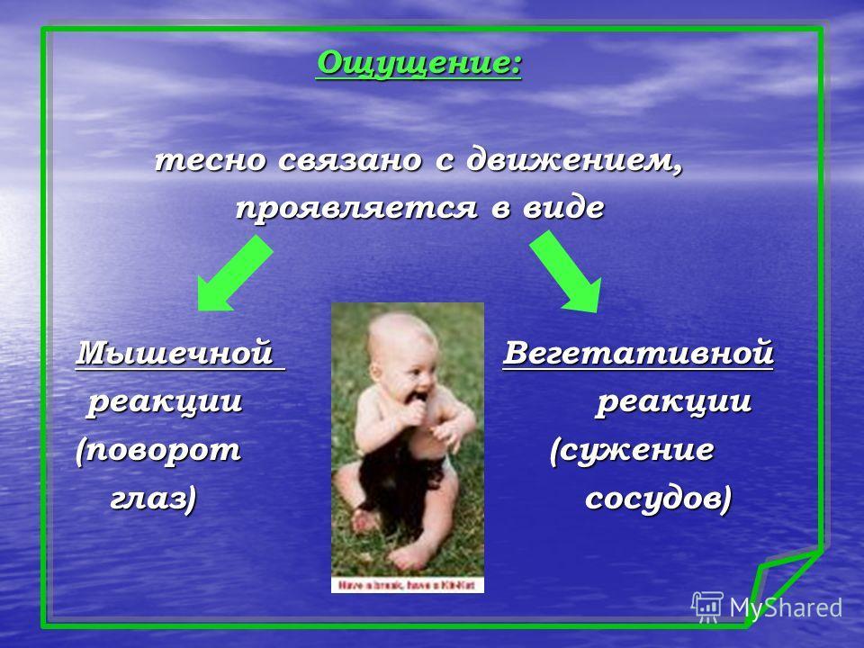 Ощущение: тесно связано с движением, проявляется в виде Мышечной Вегетативной Мышечной Вегетативной реакции реакции реакции реакции (поворот (сужение (поворот (сужение глаз) сосудов) глаз) сосудов)