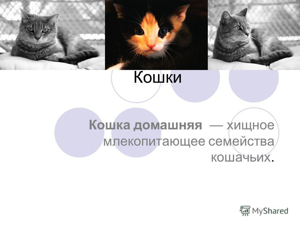 Кошки Кошка домашняя хищное млекопитающее семейства кошачьих.