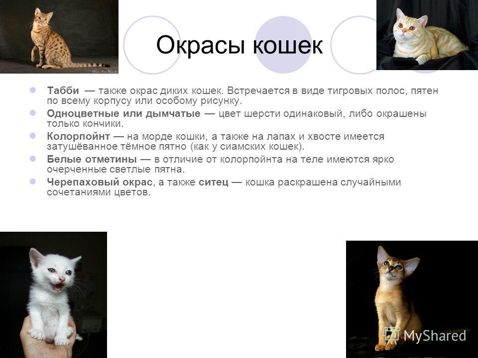 Окрасы кошек Табби также окрас диких кошек. Встречается в виде тигровых полос, пятен по всему корпусу или особому рисунку. Одноцветные или дымчатые цвет шерсти одинаковый, либо окрашены только кончики. Колорпойнт на морде кошки, а также на лапах и хв