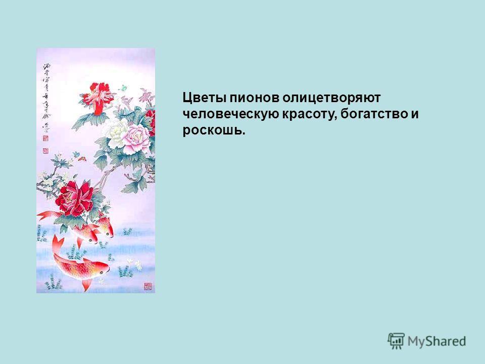 Цветы пионов олицетворяют человеческую красоту, богатство и роскошь.