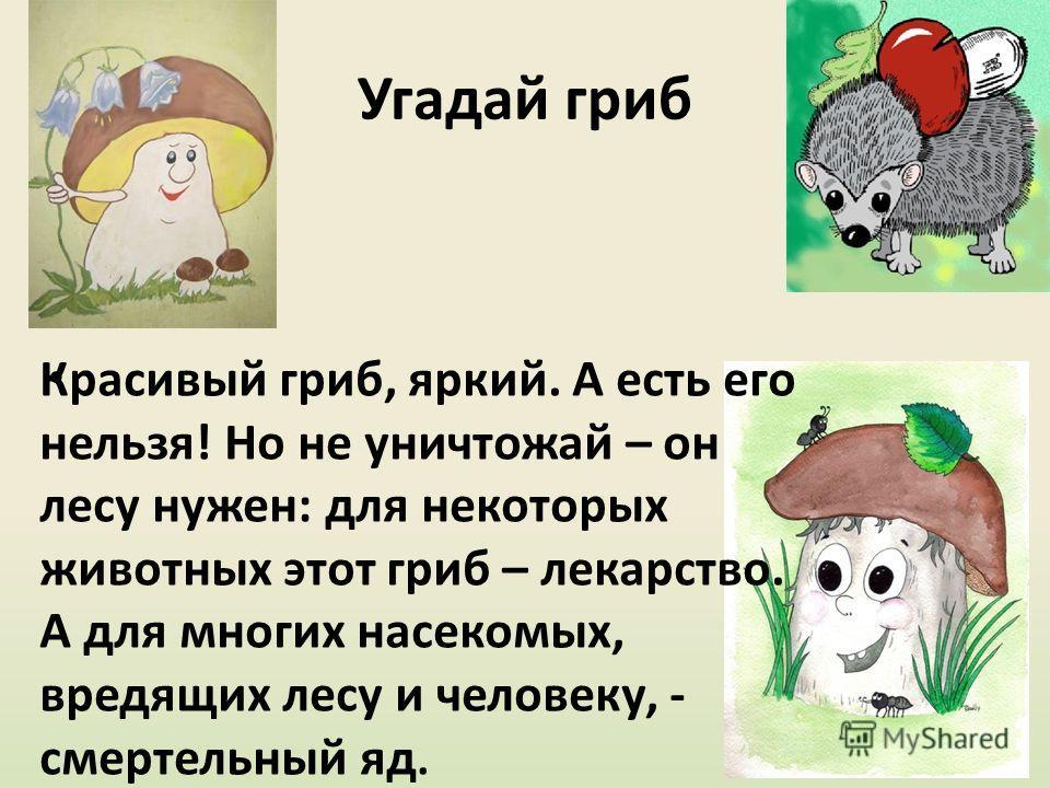 Угадай гриб Красивый гриб, яркий. А есть его нельзя! Но не уничтожай – он лесу нужен: для некоторых животных этот гриб – лекарство. А для многих насекомых, вредящих лесу и человеку, - смертельный яд.