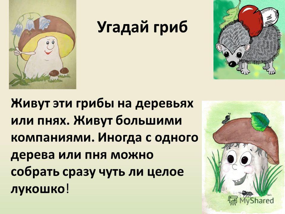 Угадай гриб Живут эти грибы на деревьях или пнях. Живут большими компаниями. Иногда с одного дерева или пня можно собрать сразу чуть ли целое лукошко!