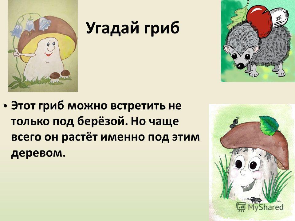 Угадай гриб Этот гриб можно встретить не только под берёзой. Но чаще всего он растёт именно под этим деревом.