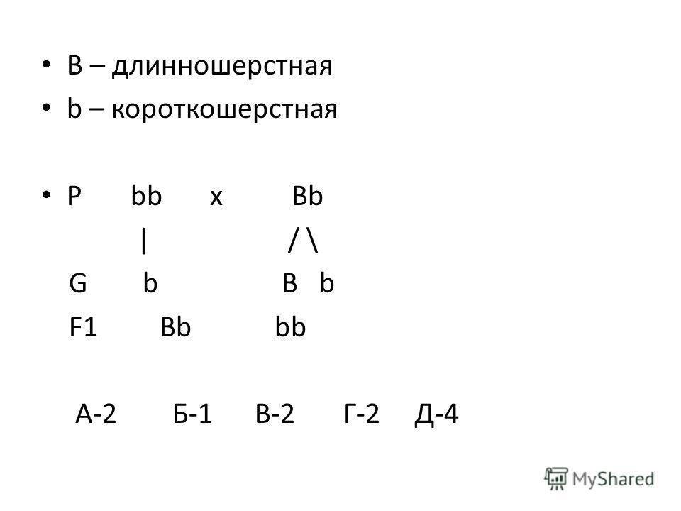 B – длинношерстная b – короткошерстная P bb х Bb | / \ G b B b F1 Bb bb A-2 Б-1 В-2 Г-2 Д-4