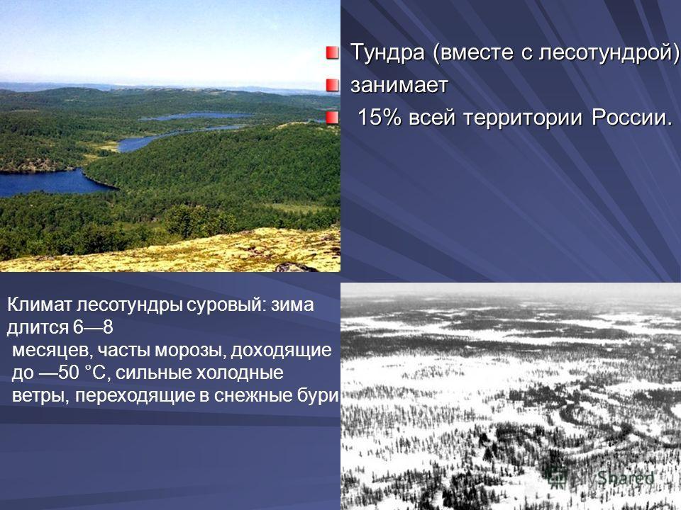 Лето в лесотундре короткое и холо дное.Средняя температура июля не превышает +10 °С. Различают тундры (и лесотундры)болотистые, песчаные, каменистые, равнинные, горные.