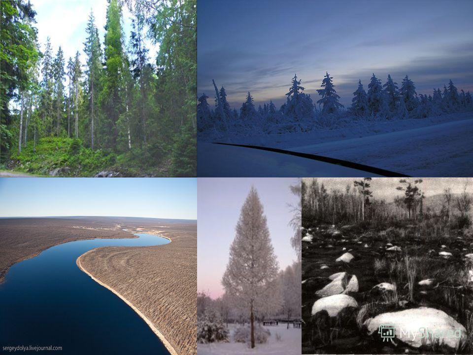 Тундра (вместе с лесотундрой) занимает 15% всей территории России. 15% всей территории России. Климат лесотундры суровый: зима длится 68 месяцев, часты морозы, доходящие до 50 °С, сильные холодные ветры, переходящие в снежные бури