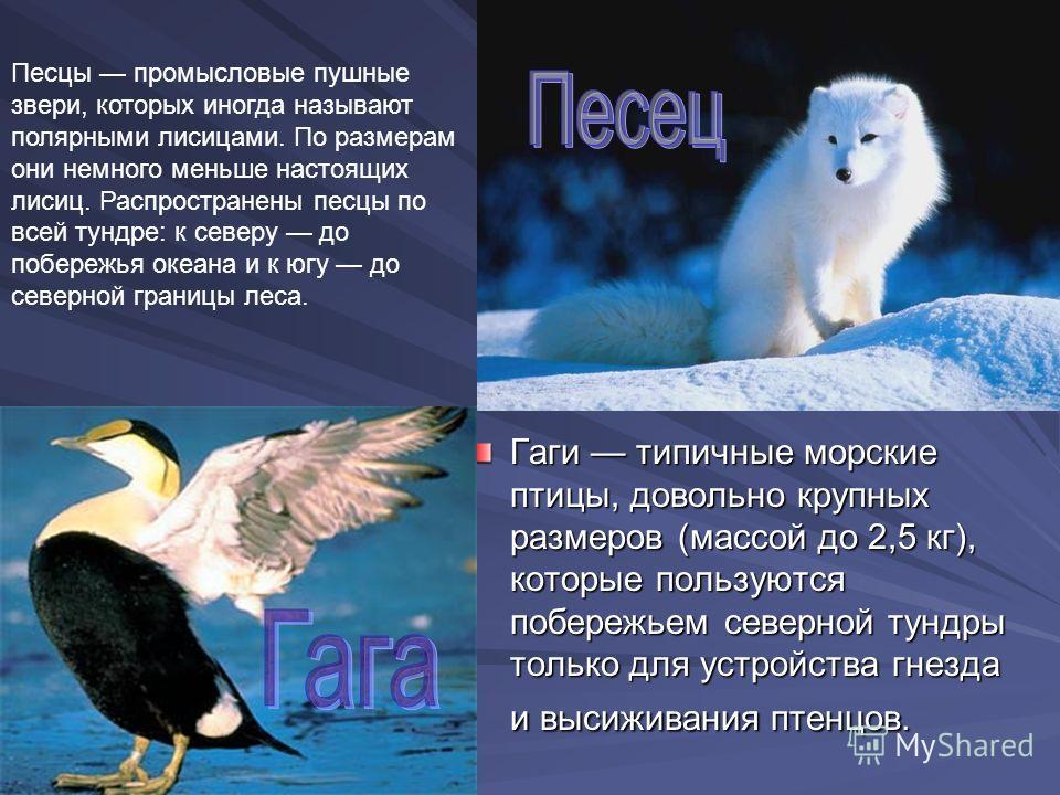 Среди журавлей белый журавль, или стерх,самый крупный вид (массой до 8 кг). Оперение почти (массой до 8 кг). Оперение почти все белое все белое Это небольшие (не крупнее вороны) птички. Они изумительно красивы: клюв черный, спина и хвост сизые, ноги