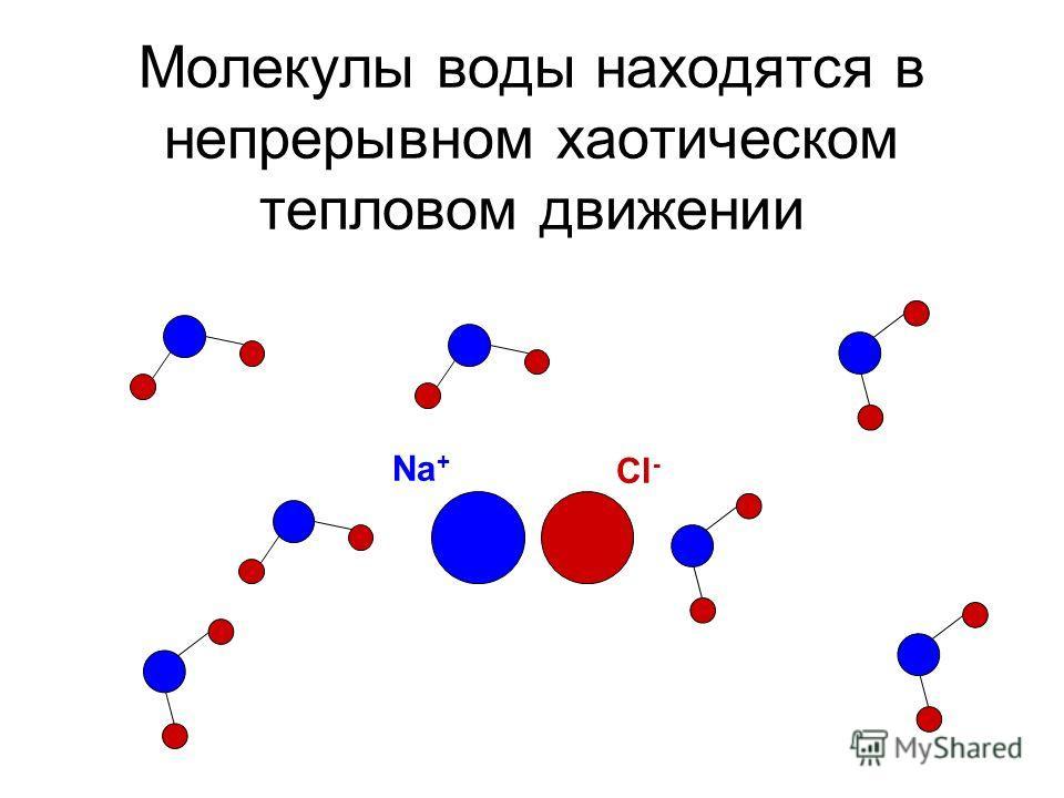 Молекулы воды находятся в непрерывном хаотическом тепловом движении Na + Cl -