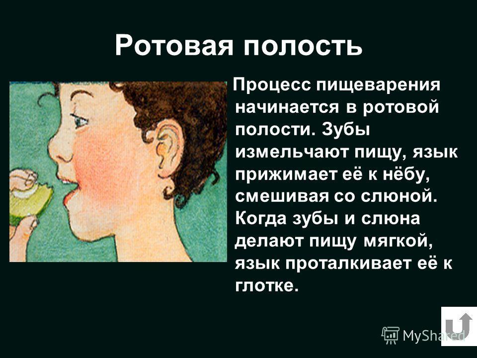 Ротовая полость Процесс пищеварения начинается в ротовой полости. Зубы измельчают пищу, язык прижимает её к нёбу, смешивая со слюной. Когда зубы и слюна делают пищу мягкой, язык проталкивает её к глотке.