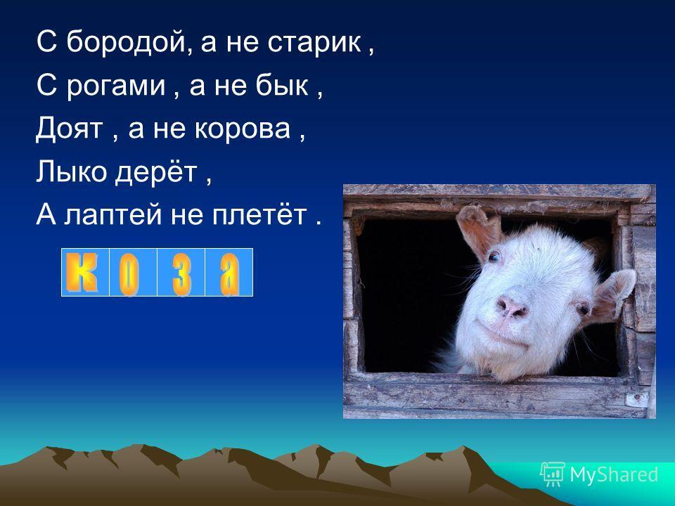 С бородой, а не старик, С рогами, а не бык, Доят, а не корова, Лыко дерёт, А лаптей не плетёт.