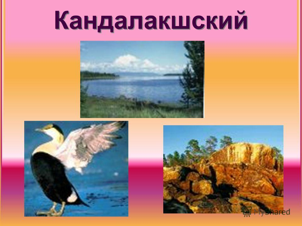 Кандалакшский