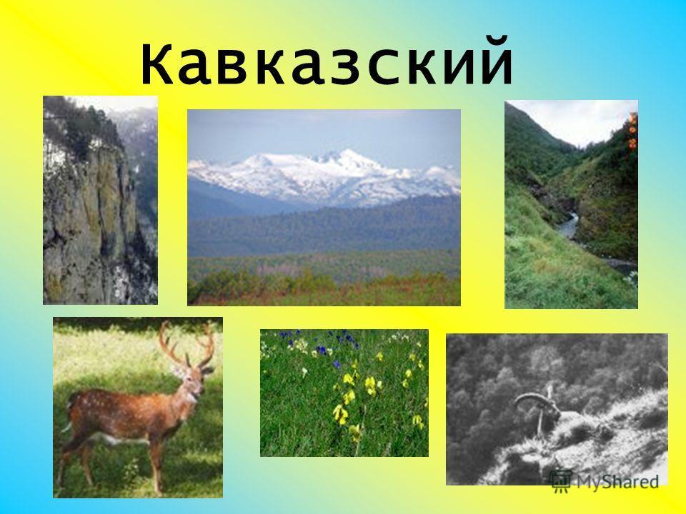 Кавказский