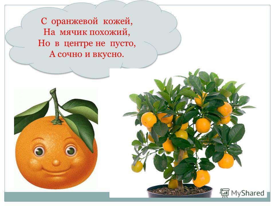 С оранжевой кожей, На мячик похожий, Но в центре не пусто, А сочно и вкусно. С оранжевой кожей, На мячик похожий, Но в центре не пусто, А сочно и вкусно.