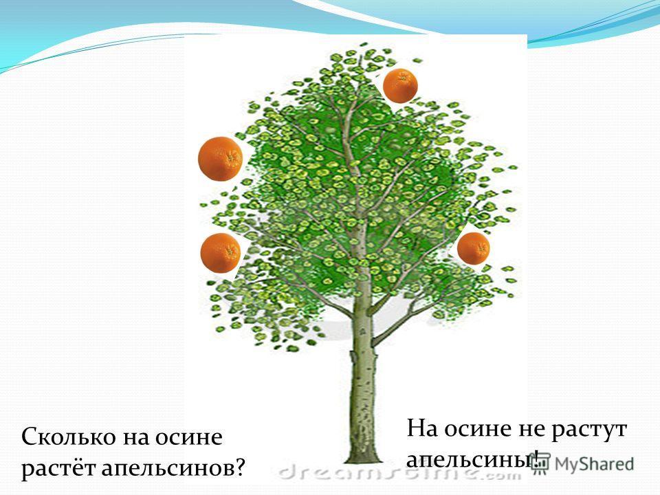 Сколько на осине растёт апельсинов? На осине не растут апельсины!
