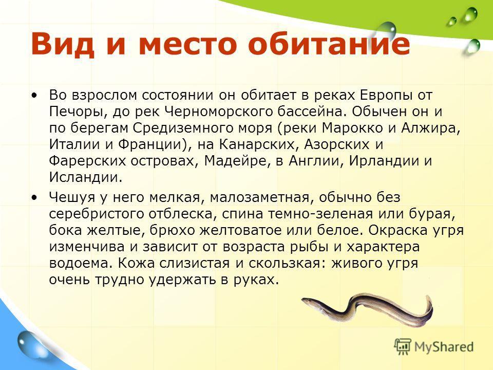Вид и место обитание Во взрослом состоянии он обитает в реках Европы от Печоры, до рек Черноморского бассейна. Обычен он и по берегам Средиземного моря (реки Марокко и Алжира, Италии и Франции), на Канарских, Азорских и Фарерских островах, Мадейре, в