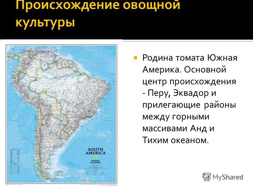 Родина томата Южная Америка. Основной центр происхождения - Перу, Эквадор и прилегающие районы между горными массивами Анд и Тихим океаном.