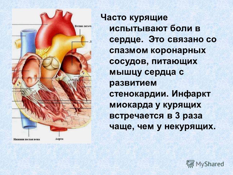 Часто курящие испытывают боли в сердце. Это связано со спазмом коронарных сосудов, питающих мышцу сердца с развитием стенокардии. Инфаркт миокарда у курящих встречается в 3 раза чаще, чем у некурящих.