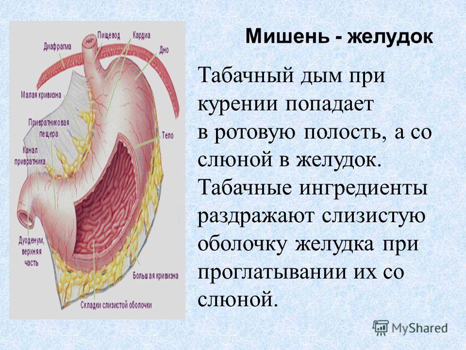 Мишень - желудок Табачный дым при курении попадает в ротовую полость, а со слюной в желудок. Табачные ингредиенты раздражают слизистую оболочку желудка при проглатывании их со слюной.