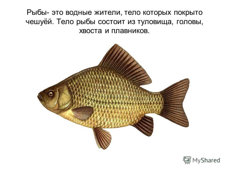 Рыбы- это водные жители, тело которых покрыто чешуёй. Тело рыбы состоит из туловища, головы, хвоста и плавников.