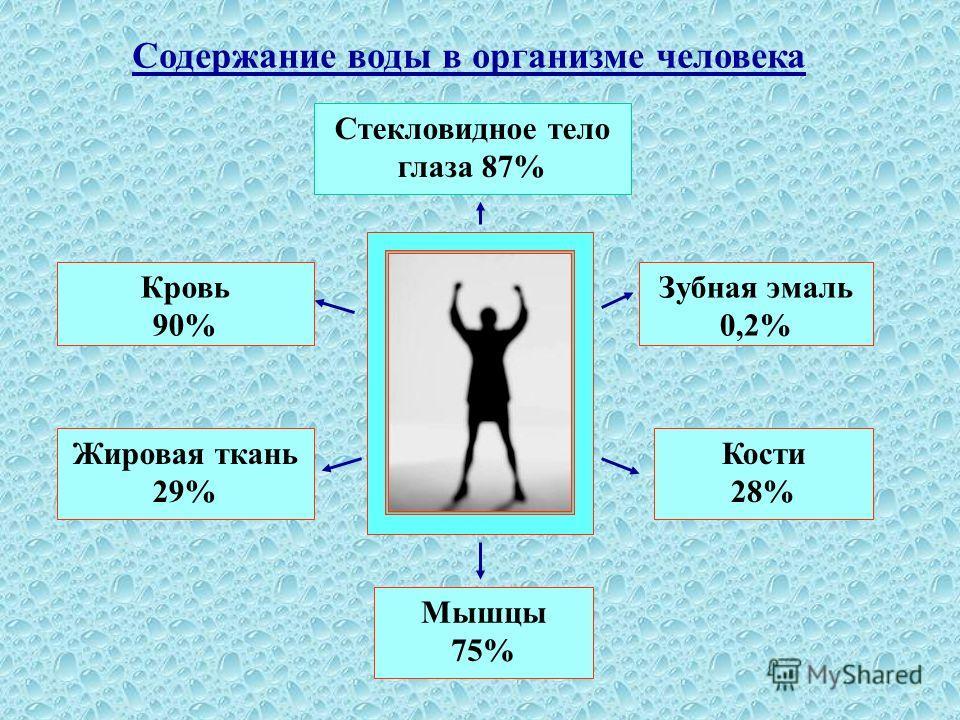 Содержание воды в организме человека Стекловидное тело глаза 87% Зубная эмаль 0,2% Кости 28% Мышцы 75% Жировая ткань 29% Кровь 90%