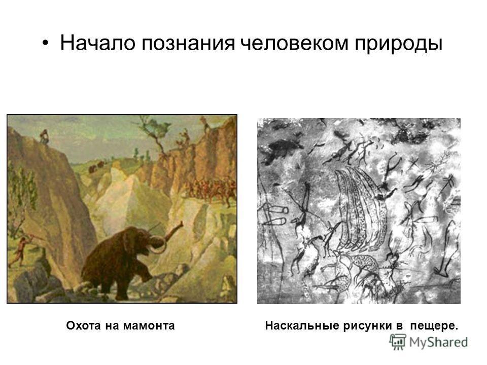 Начало познания человеком природы Наскальные рисунки в пещере. Охота на мамонта