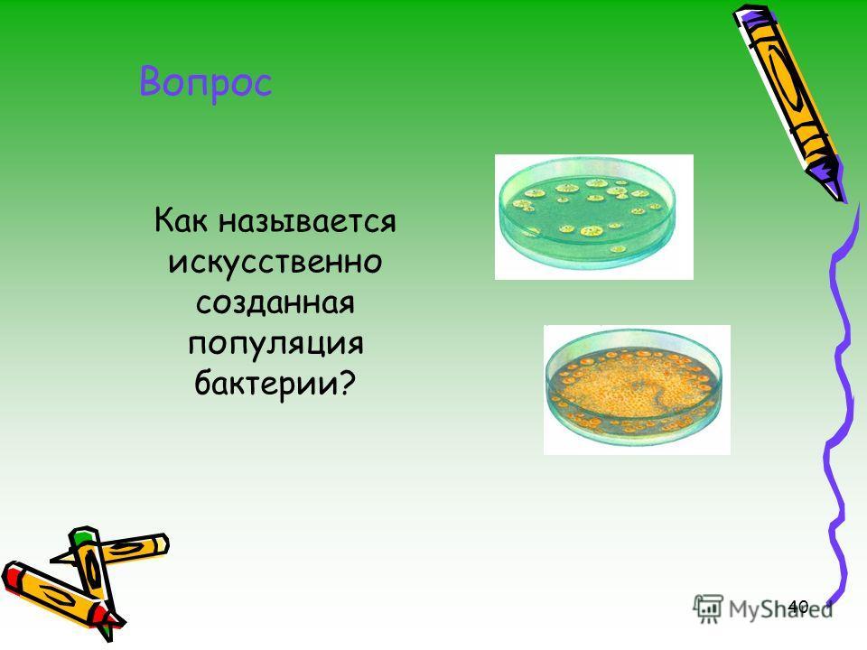 40 Как называется искусственно созданная популяция бактерии? Вопрос